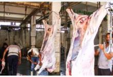 Photo of حقيقة اغلاق مجازر اللحوم في محافظة الدقهلية