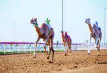 Photo of سباقات الهجن تساعد في زيادة السياحة للمنطقة