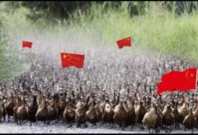 Photo of الصين ترسل 100الف بطة لتنفيذ مهمة خاصه بباكستان
