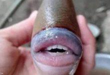 Photo of العثور على سمكة تشبه الإنسان فى ماليزيا.. اعرف حكايته