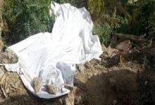 Photo of كشف غموض العثور على جثة ملقاة على الطريق بـالمنصورة