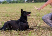 Photo of على مسئولية المفتي: لعاب الكلب لا يفسد الوضوء