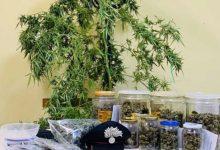 Photo of أب يزرع مخدرات داخل منزله و السبب!