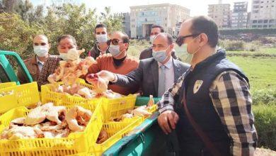 """Photo of خلال جولته رئيس مجلس مدينة """"مطوبس"""" يضبط لحوم فاسدة ويفتتح فصول للتمريض"""