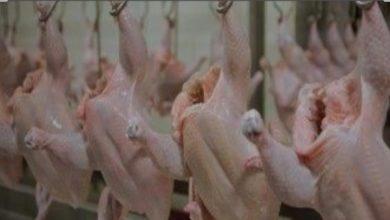 Photo of مفاجأه للمصريين بخصوص أسعار الدواجن