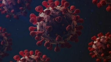 Photo of سلاله جديده من فيروس كورونا تظهر في ألمانيا