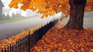 Photo of الأرصاد تعلن عن موعد انتهاء فصل الصيف رسميا و دخول فصل الخريف