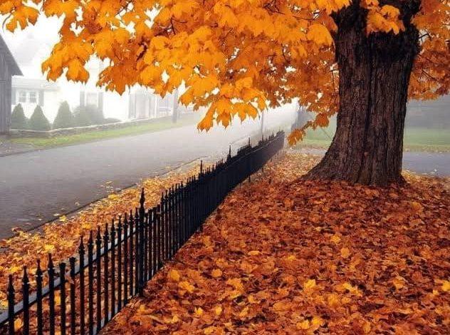 الأرصاد تعلن عن موعد انتهاء فصل الصيف رسميا و دخول فصل الخريف